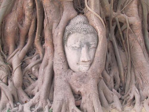 Buddha_in_boh_tree